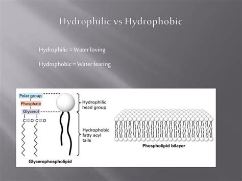 carbohydrates hydrophilic or hydrophobic ppt organic chemistry powerpoint presentation id 2133381