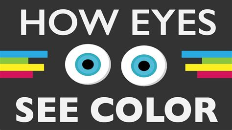 how does the eye see color how do your see color