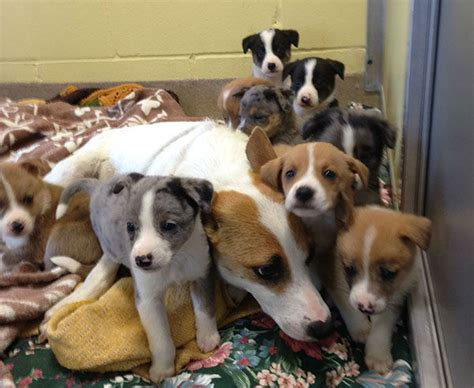 nj puppy rescue photos puppies relax after nj rescue 6abc