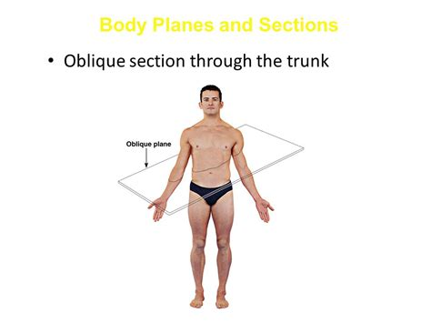 body planes and sections introduction to anatomy ppt video online download