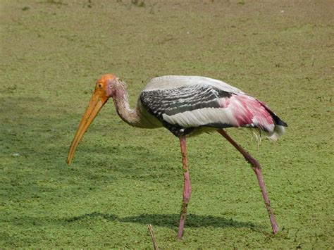 Mata Ponds pratapgarh sita mata wildlife sanctuary sita mata