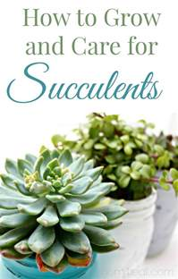gardening tips for beginners growing succulents