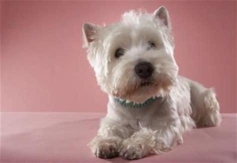 cesar cut for dogs 191 qu 233 perro est 225 en la etiqueta de la comida para perros de
