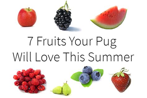pug diet tips 7 fruits your pug will this summer the pug diary
