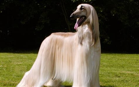 haired breeds 10 haired breeds