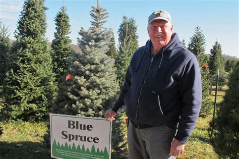 timber christmas tree farms topple around central ohio