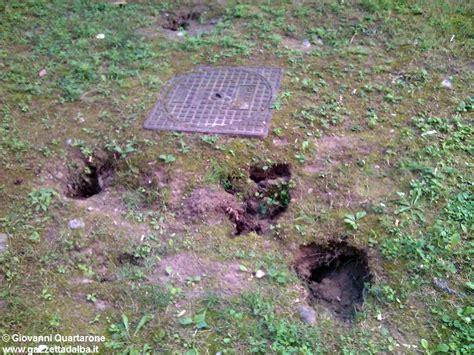 ratti in giardino alba buche pericolose con topi in via rorine