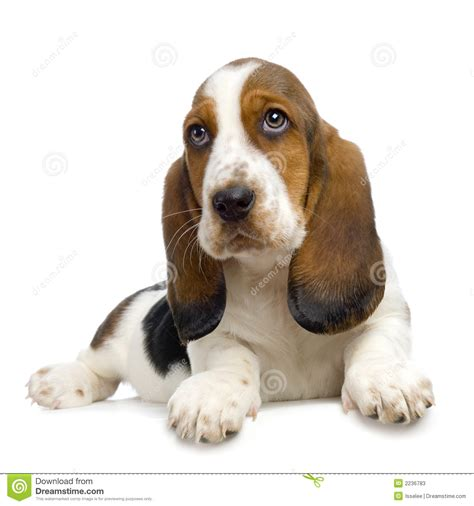 hush puppys hush puppies stock photos image 2236783