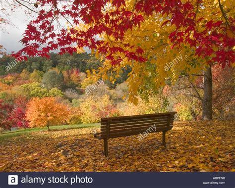 mount lofty botanic gardens seat in botanical gardens trees in autumn mount lofty