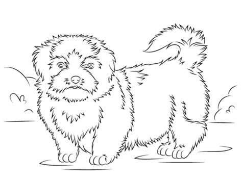 shih tzu pictures to print shih tzu coloring page free printable coloring pages