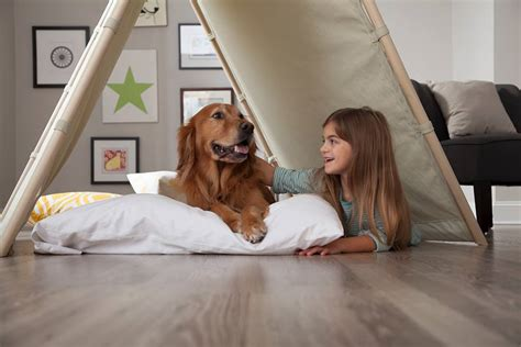Friendly Floors by 3 Pet Friendly Flooring Options Outer Banks Floor