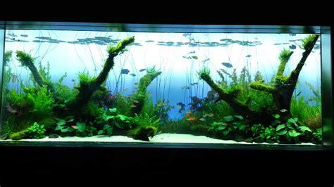 Sumida Aquarium  Takashi Amano Nature Aquarium Tank 4