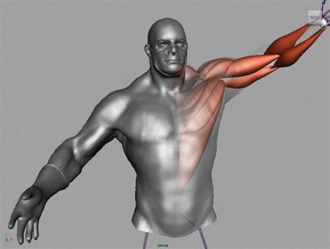 maya werewolf tutorial 154 best 3d rigging images on pinterest 3d animation