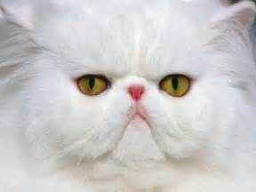 Funniest amp cute cat faces pets cute and docile