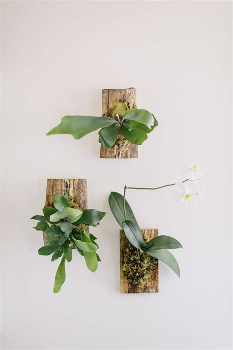 plant wall hangers indoor 17 best images about staghorn fern mounting ideas on