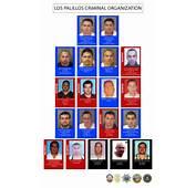 Los Palillos' Gang Members Plead Guilty To Avoid Possible Death