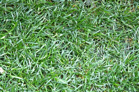 the best 3 grass types for your denver co lawn lawnstarter