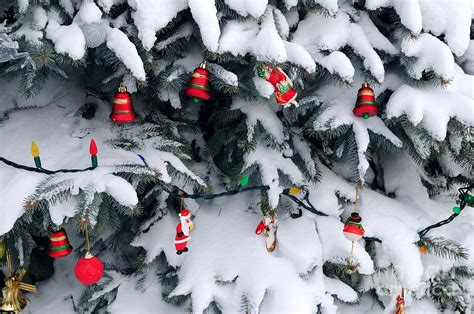 christmas decorations in snow photograph by elena elisseeva