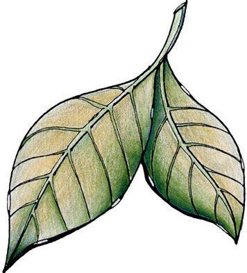 decorar hoja arbol maestra de infantil hojas de oto 241 o dibujos para el 225 rbol