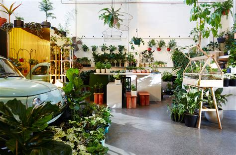 the plant society in collingwood by jason chongue