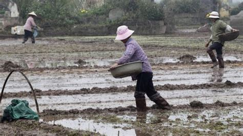 bbc news pitched battle over vietnam farmland
