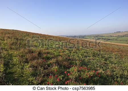 stock images of autumn wildflowers field poppies papaver