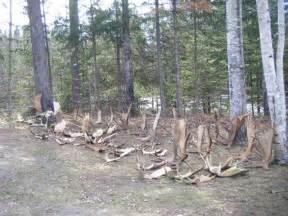 moose shed allagash guide service