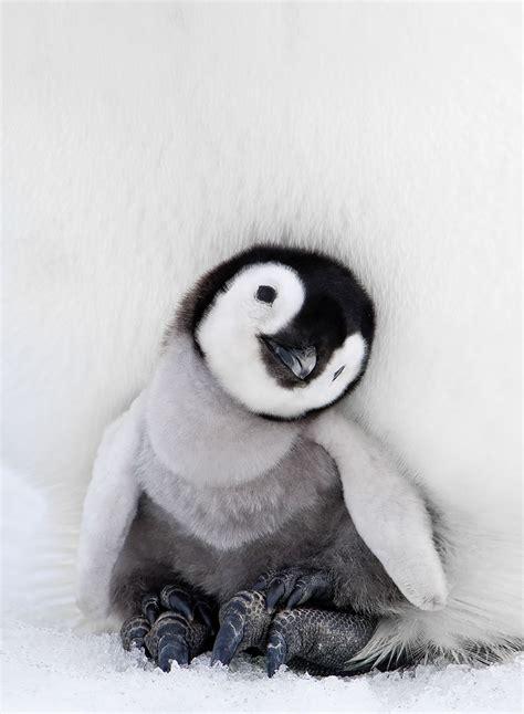 Foier by Het Is Pingu 239 N Awareness Day Dus 11 Beeldschone Foto S