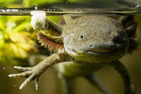 imagenes animales endemicos de mexico las 10 especies m 225 s amenazadas de m 233 xico