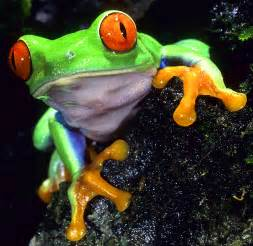 colorful frog | Frogs | Pinterest Kitten