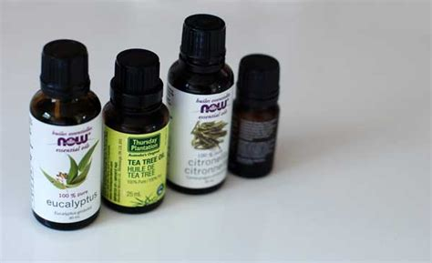 bed bugs tea tree oil is tea tree oil an effective treatment for bed bugs