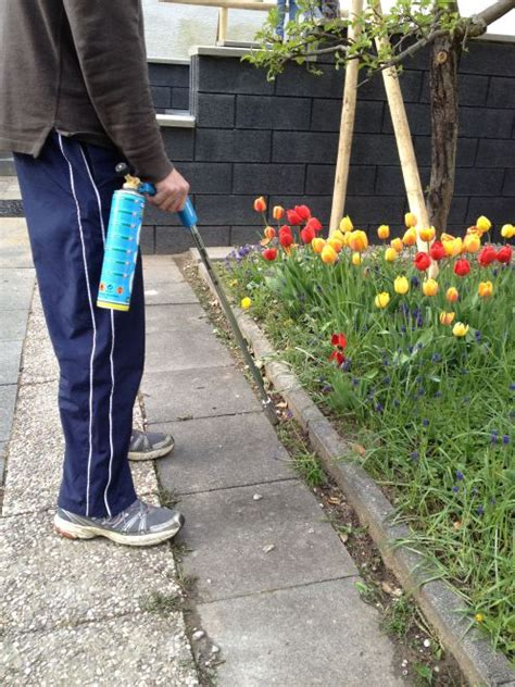 how to kill weeds in flower beds 14 tips get rid of weeds from the garden once and for all
