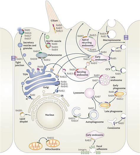 news harald stenmarks group dept  molecular cell