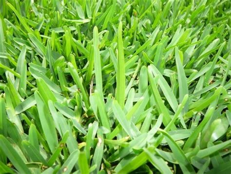 types of grass types of everything