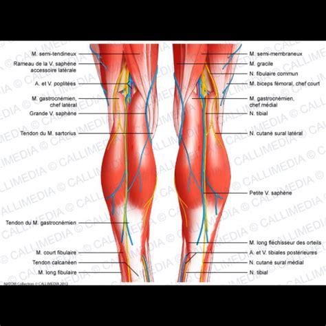knee parts diagram the knee anatomy human anatomy diagram