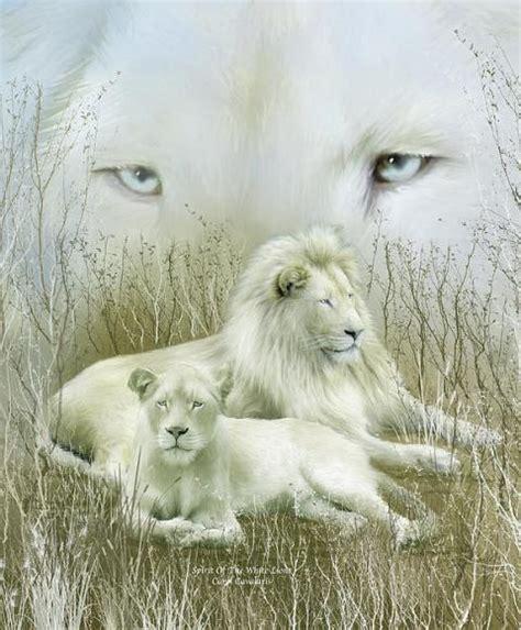 imagenes leon blanco fotos imagenes de leones blanco en movimiento imagui