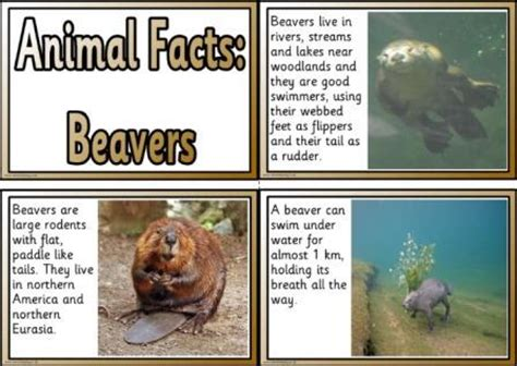 printable animal fun facts free animal facts printable flashcards or posters