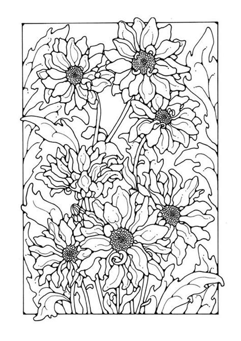 coloring page chrysanthemum adult coloring pages pinterest
