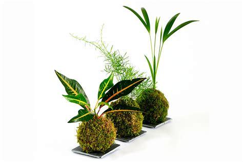 creare un piccolo giardino kokedama come creare un piccolo giardino sospeso la