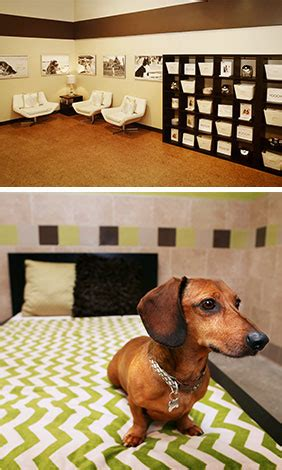 puppy day care chicago lincoln park chicago boarding doggie daycare spa pooch hotel