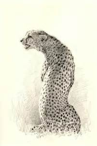 sketchbook cheetah the of painting cheetahs keith andrew mcallister