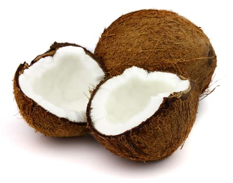 kokosnuss le image gallery kelapa