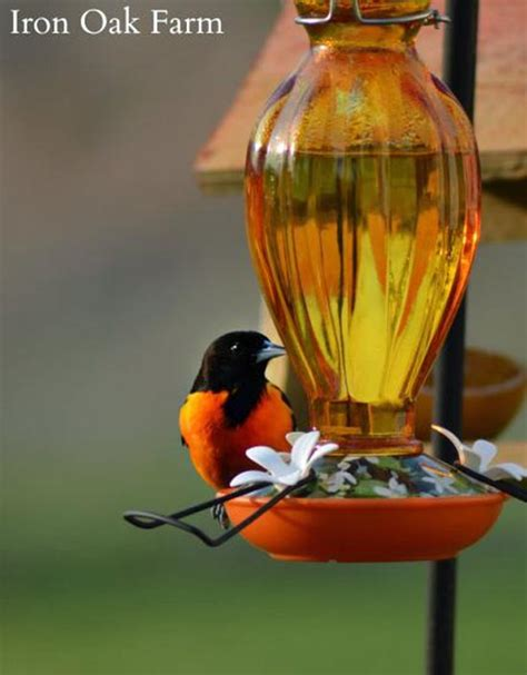 feeding orioles iron oak farm blog grit magazine