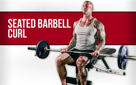 seated dumbbell curl seated barbell curl