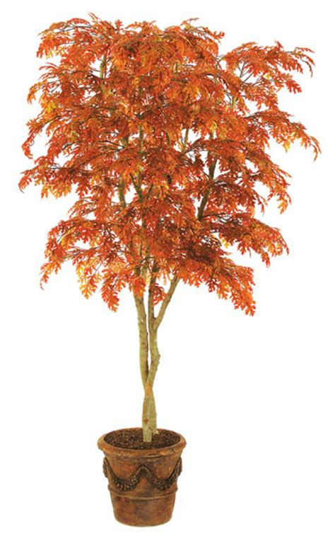 fire retardant oak  willow trees