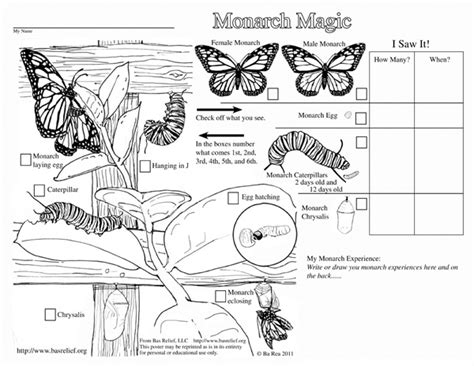 butterfly coloring page education com monarch pupa coloring page coloring pages
