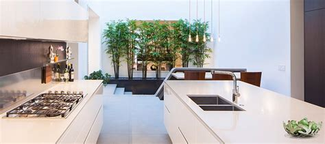 plants in the kitchen ten rooms with stylish indoor plants best of interior design