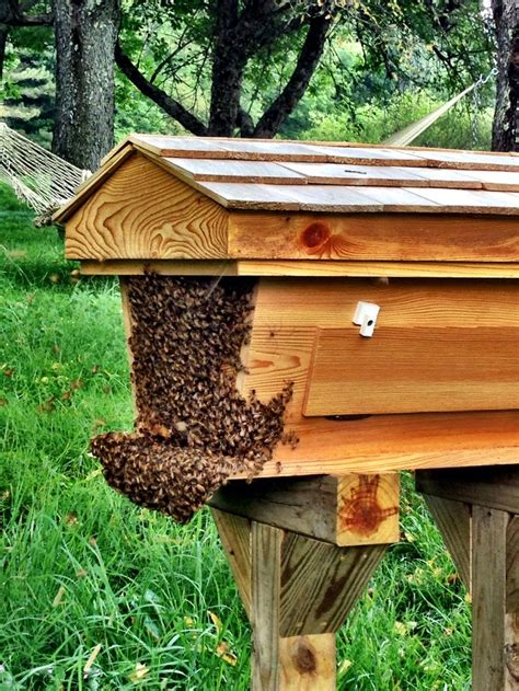 backyard honey bee hive 80 best images about backyard bees top bar hives on