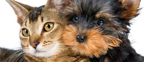 comune di bologna ufficio anagrafe chiusura per trasloco dell ufficio anagrafe canina iperbole