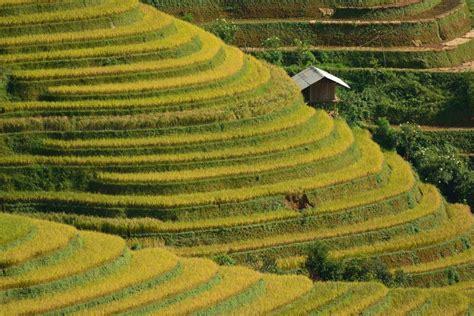 coltivazione a terrazza stunning coltivazione a terrazza pictures idee